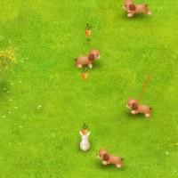 Carrot Track.jpg